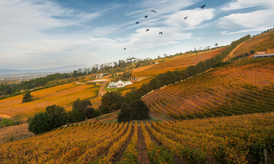 The vineyards of the Constantia wine estate near Cape Town show their autumn colours.