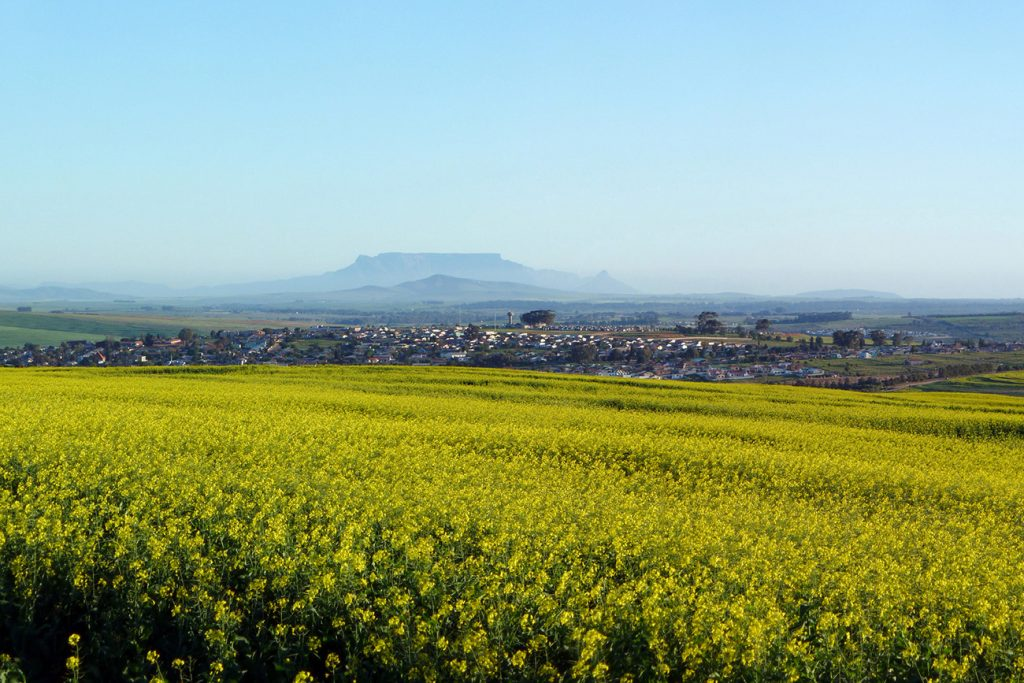 Africa - Canola fields and the South African town of Clanwilliam in the Olifants River valley region of the Cederberg. Cape Town's Table Mountain can be seen in the distance, 200 kilometres to the south.