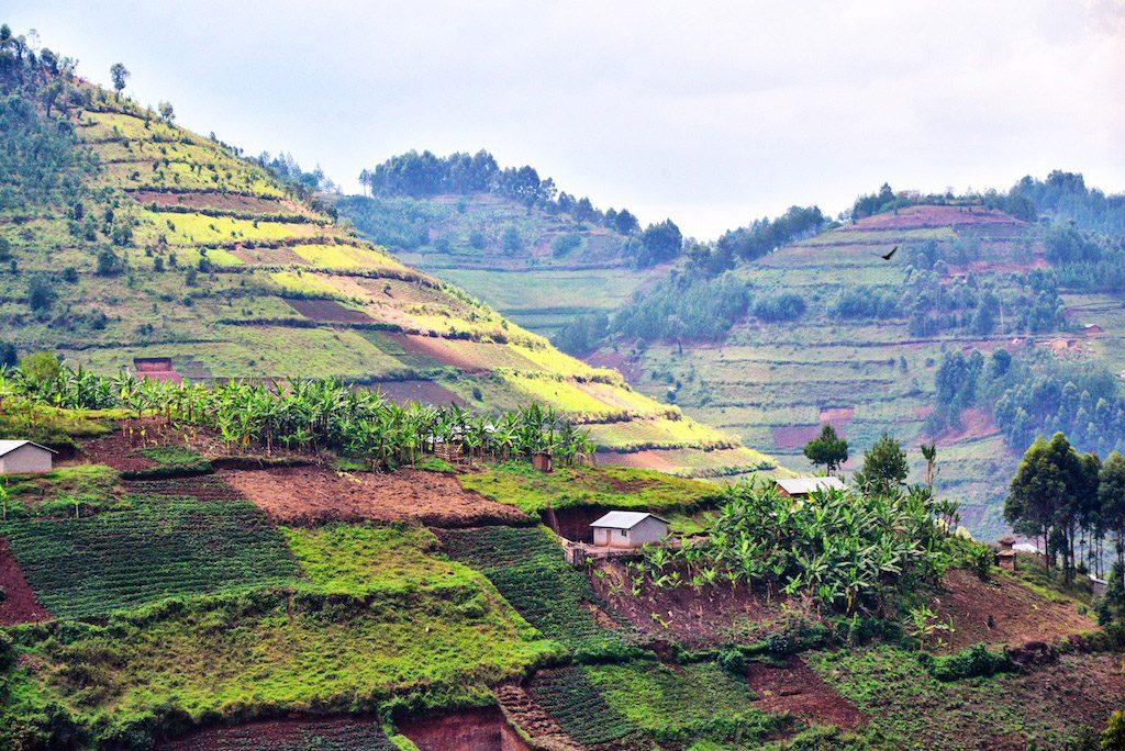Africa - The fields of small-scale farmers blanket hillsides in Kikungiri near the town of Kabale in southeastern Uganda.